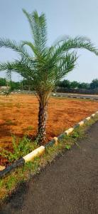 Project Image of 437.0 - 2695.0 Sq.ft Residential Plot Plot for buy in Kenaan Secretariat Nagar Extn