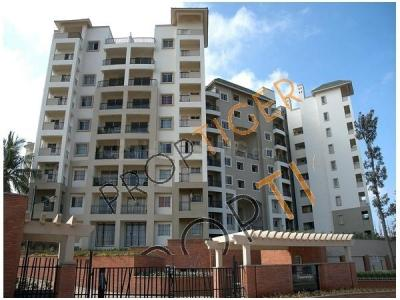 Gallery Cover Image of 1150 Sq.ft 2 BHK Apartment for rent in NCC Nagarjuna Green Ridge, HSR Layout for 34000