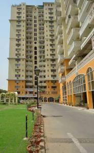 Gallery Cover Image of 1450 Sq.ft 3 BHK Apartment for rent in DLF Belvedere Park, DLF Phase 3 for 45000