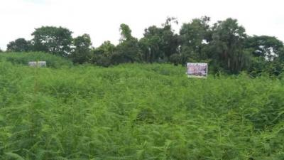 Project Image of 1440 - 3600 Sq.ft Residential Plot Plot for buy in Greenview Amrita Village
