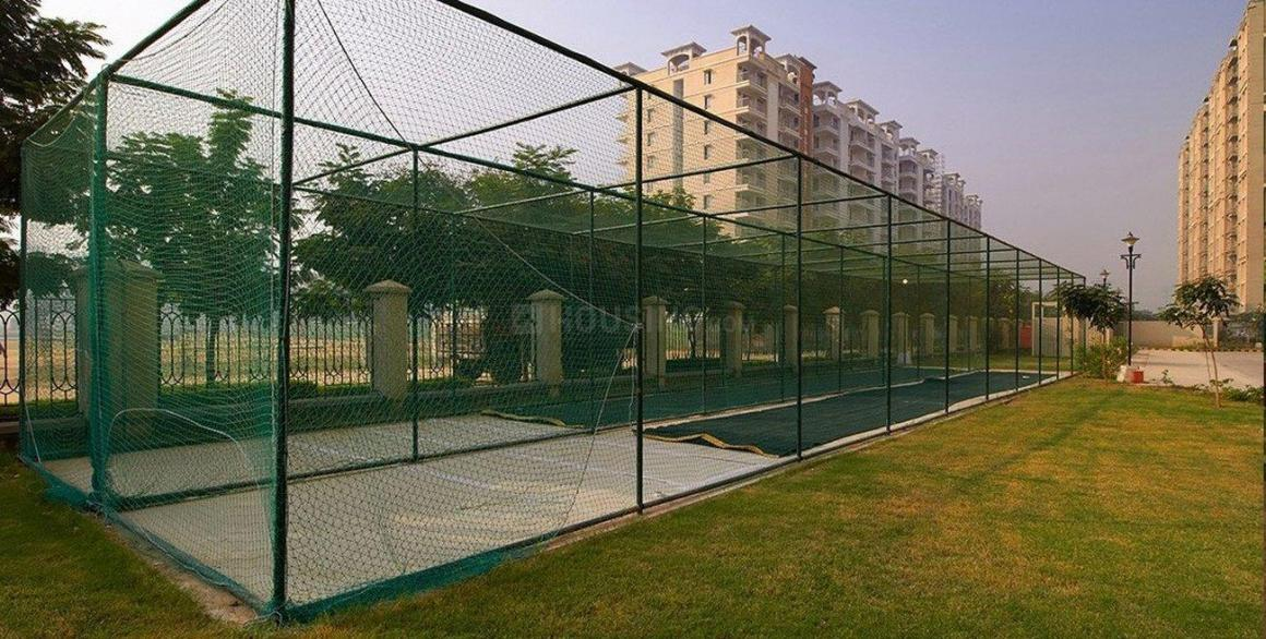 cricket net.jpg