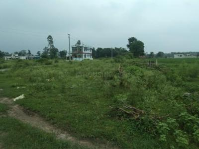 Project Image of 899.97 - 8099.95 Sq.ft Residential Plot Plot for buy in Hanukripa Phase 1