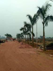 500 Sq.ft Residential Plot for Sale in Tikawali, Faridabad