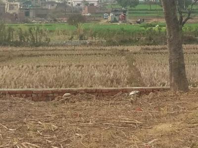 200 Sq.ft Residential Plot for Sale in Manduwala, Dehradun