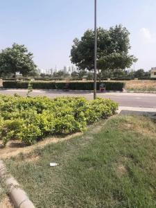 1620 Sq.ft Residential Plot for Sale in Sector 89, Gurgaon