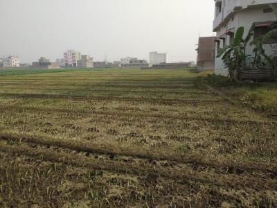 1200 Sq.ft Residential Plot for Sale in Kachuara, Patna