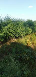 150 Sq.ft Residential Plot for Sale in Khandwa Taraf Kumbhi, Khandwa