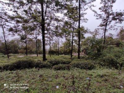 11543 Sq.ft Residential Plot for Sale in Coonoor, Nilgiris