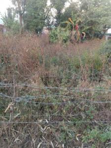 600 Sq.ft Residential Plot for Sale in Loharkadi Upper Sudher, Dharamsala