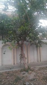 Gallery Cover Image of 2200 Sq.ft 5 BHK Villa for buy in Butler Colony for 23000000