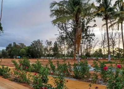 Gallery Cover Image of  Sq.ft Residential Plot for buy in Devanahalli for 7440000