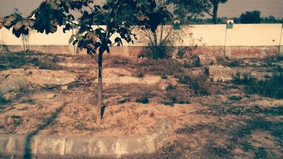 1860 Sq.ft Residential Plot for Sale in Jassi Pauwali, Bathinda