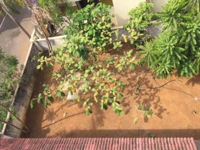 800 Sq.ft Residential Plot for Sale in Sembakkam, Chennai
