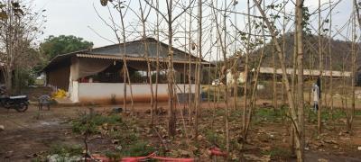 21000 Sq.ft Residential Plot for Sale in Panagar, Jabalpur