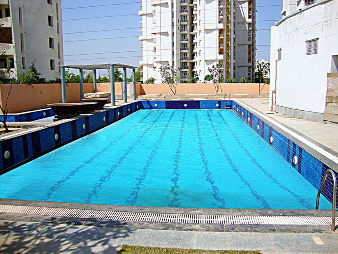 Swimming Pool Image of 2194 Sq.ft 3 BHK Apartment for rent in Sector 86 for 17000
