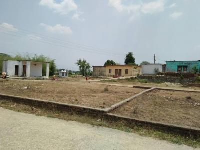 900 Sq.ft Residential Plot for Sale in Baronwala, Dehradun