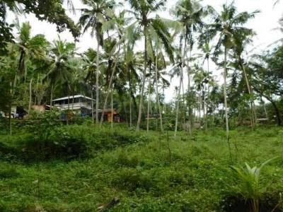 Gallery Cover Image of  Sq.ft Residential Plot for buy in Karimankulam for 900000