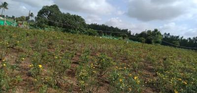 1089 Sq.ft Residential Plot for Sale in Bychapura, Bangalore