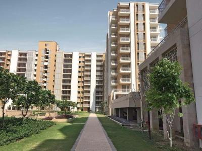 Gallery Cover Image of 1400 Sq.ft 3 BHK Apartment for rent in Puri Pratham, Sector 84 for 16000