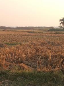 2160 Sq.ft Residential Plot for Sale in Jagadishpur, Kolkata