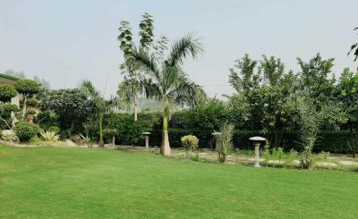 Gallery Cover Image of 45000 Sq.ft 5 BHK Villa for rent in DLF Farms for 500000
