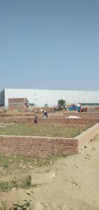 Gallery Cover Image of  Sq.ft Residential Plot for buy in Sector 81 for 900000