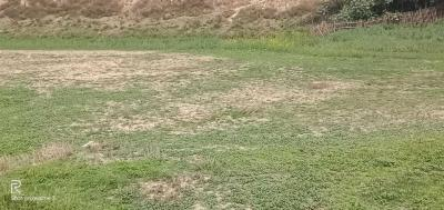 2665 Sq.ft Residential Plot for Sale in Lalbagh, Patna