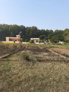 1017 Sq.ft Residential Plot for Sale in Chandrabani, Dehradun