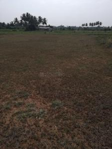 Gallery Cover Image of  Sq.ft Residential Plot for buy in Kalapatti for 51975000