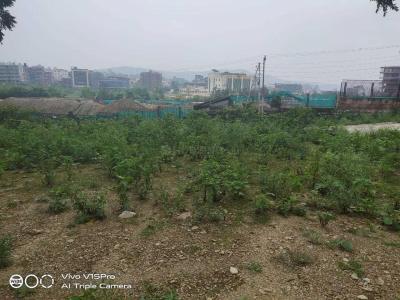 900 Sq.ft Residential Plot for Sale in Kishanpur, Dehradun