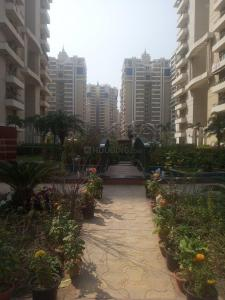 Gallery Cover Image of 1950 Sq.ft 3 BHK Apartment for rent in Sector 137 for 26500