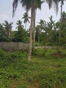 56760 Sq.ft Residential Plot for Sale in Koonammavu, Kochi