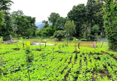 4356 Sq.ft Residential Plot for Sale in Kodaikanal, Dindigul