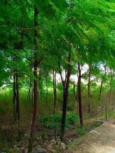 1802 Sq.ft Residential Plot for Sale in Khanna, Ludhiana