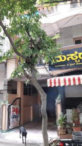 Building Image of Srinivasan PG in HSR Layout