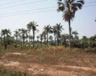 Gallery Cover Image of  Sq.ft Residential Plot for buy in Cox Town for 20000000