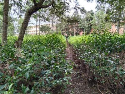 20000 Sq.ft Residential Plot for Sale in Coonoor, Nilgiris