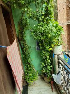 Gallery Cover Image of 160 Sq.ft 1 BHK Independent Floor for rent in Shahdara for 8000