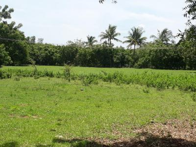 Gallery Cover Image of 1000 Sq.ft Residential Plot for buy in Chengalpattu for 1000000