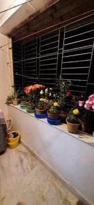 पश्चिम बरिशा  में 2000000  खरीदें  के लिए 480 Sq.ft 1 BHK अपार्टमेंट के बालकनी  की तस्वीर