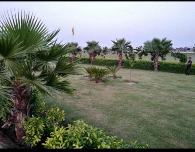 990 Sq.ft Residential Plot for Sale in sector 28A, Bahadurgarh