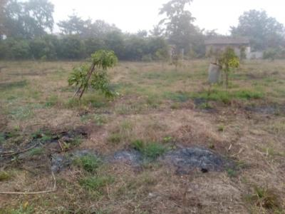 4275 Sq.ft Residential Plot for Sale in Haranwali, Palghar