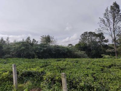 10900 Sq.ft Residential Plot for Sale in Coonoor, Nilgiris
