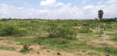 Gallery Cover Image of  Sq.ft Residential Plot for buy in Pasumamula for 3120000