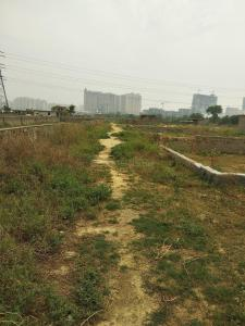 119 Sq.ft Residential Plot for Sale in Sector 121, Noida
