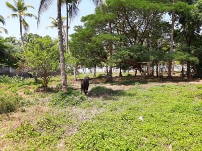Gallery Cover Image of 765 Sq.ft Residential Plot for buy in Guruvayoor for 600000