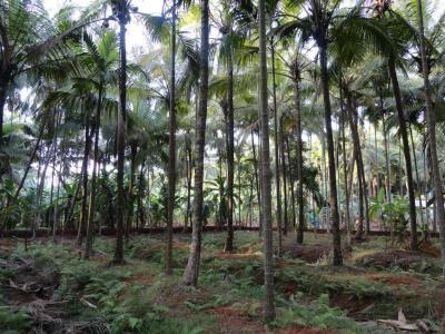 15682 Sq.ft Residential Plot for Sale in Kuttikkattoor, Kozhikode