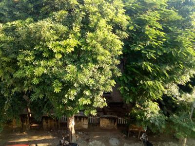 972 Sq.ft Residential Plot for Sale in Govindpuram, Ghaziabad