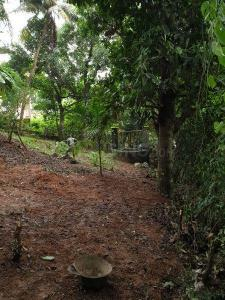 Gallery Cover Image of  Sq.ft Residential Plot for buy in Derebail for 6000000