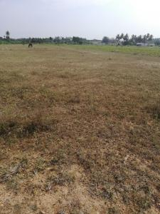 Gallery Cover Image of  Sq.ft Residential Plot for buy in Kalapatti for 150000000